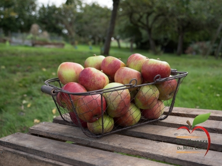 Pommesétoilée01_1066158