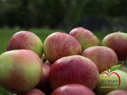 PommesétoiléeZoom2_1066160